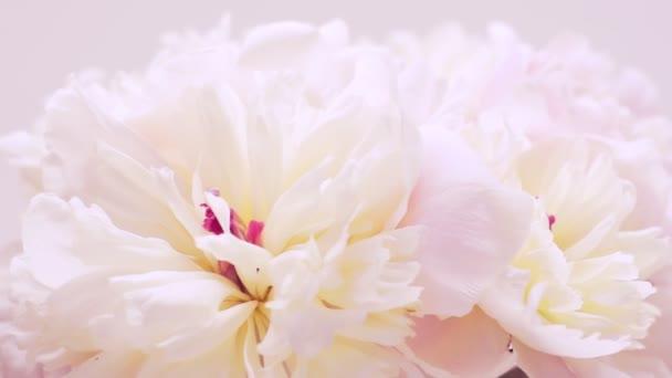 Egy csokor fehér-rózsaszín peonies. Természetes virágos háttér. Valentin-napi koncepció, esküvői háttér