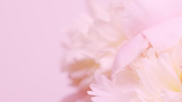 Jasně růžové přirozené pozadí s kyticí peoniemi. Denní pojetí valentinek, svatební pozadí