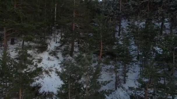 Filmművészeti rezsi lövés, mint havas fenyő erdő havazik