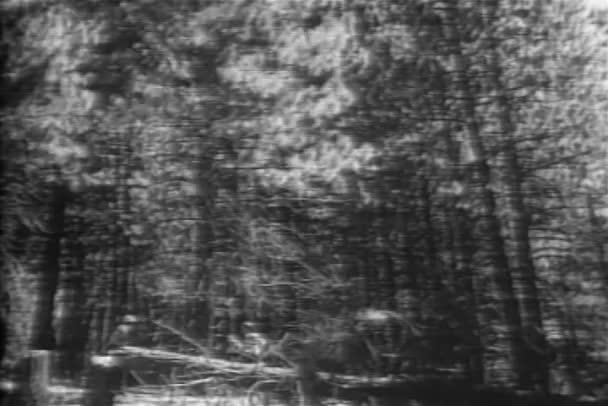 Dřevorubci sledování strom padat v lese, 1940s
