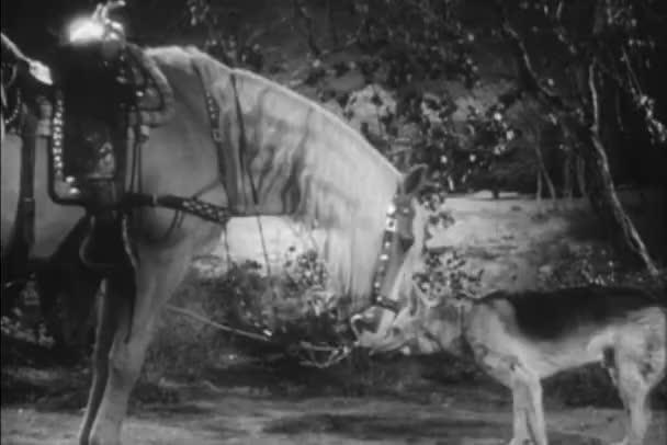 Boční pohled na koně lízání německého ovčáka, 1940s
