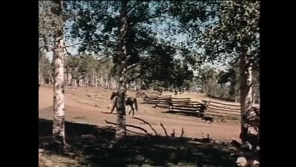 Muž vedle chlapec na koni na venkovské silnici