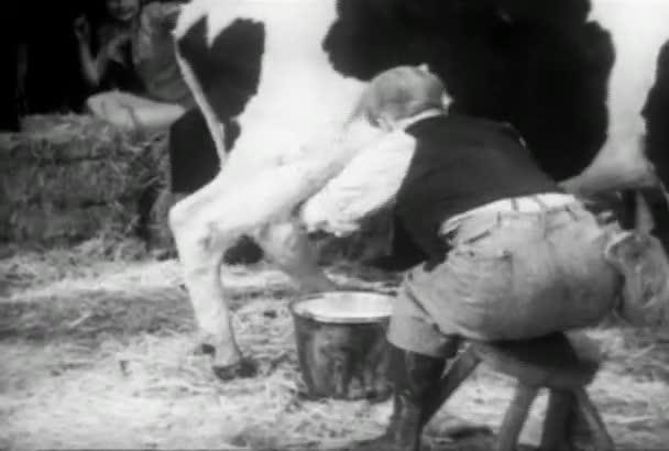 Mann melkt eine unkooperative Kuh, 1930er Jahre