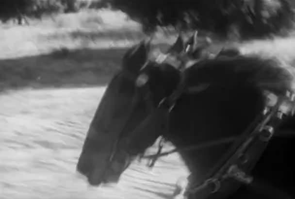 Nahaufnahme von zwei spannte Pferde Galopp nebeneinander, 1930er Jahre