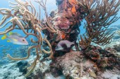 Fotografie Coral reef in Carbiiean Sea off the coast of Bonaire in shallow water
