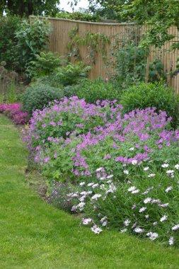 English garden flower border
