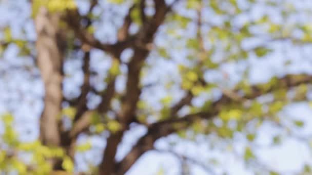 stromy větve sluneční světlo pozadí