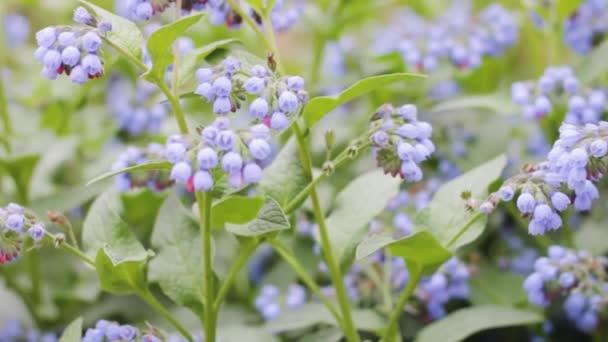 Bokor virág kék lila jellegű háttér