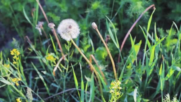 Květinový DANEC blízký zelený