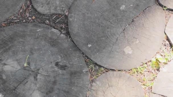 wooden  texture  design floor log