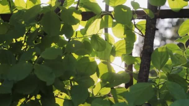 sun through  branches  tree  nature