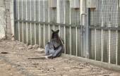Fotografia Sad kangaroo locked in zoo, animals captivity