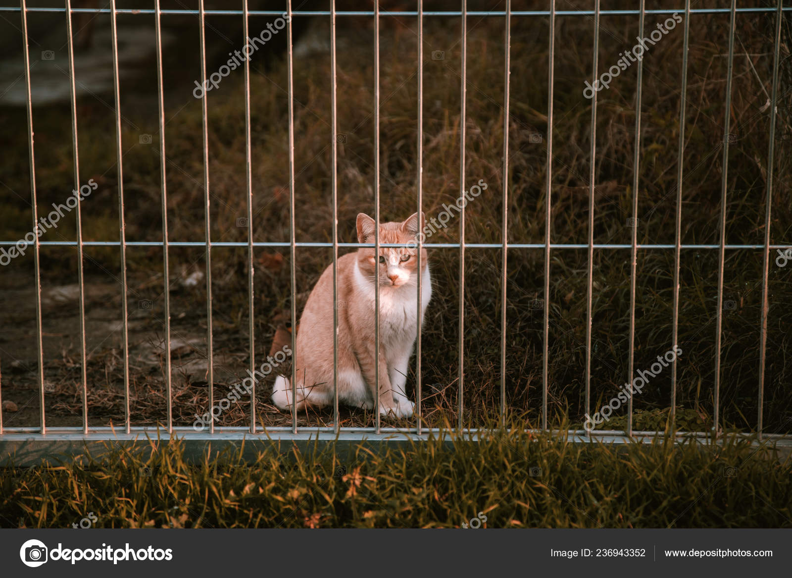 Cats Abandoned Street Animal Abuse Loneliness — Stock Photo