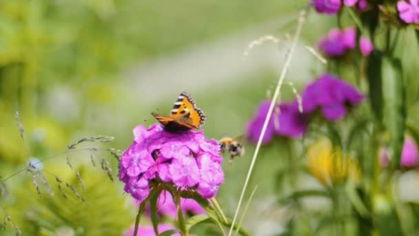 Slow motion shot of butterfly pollinates pink flower on green background