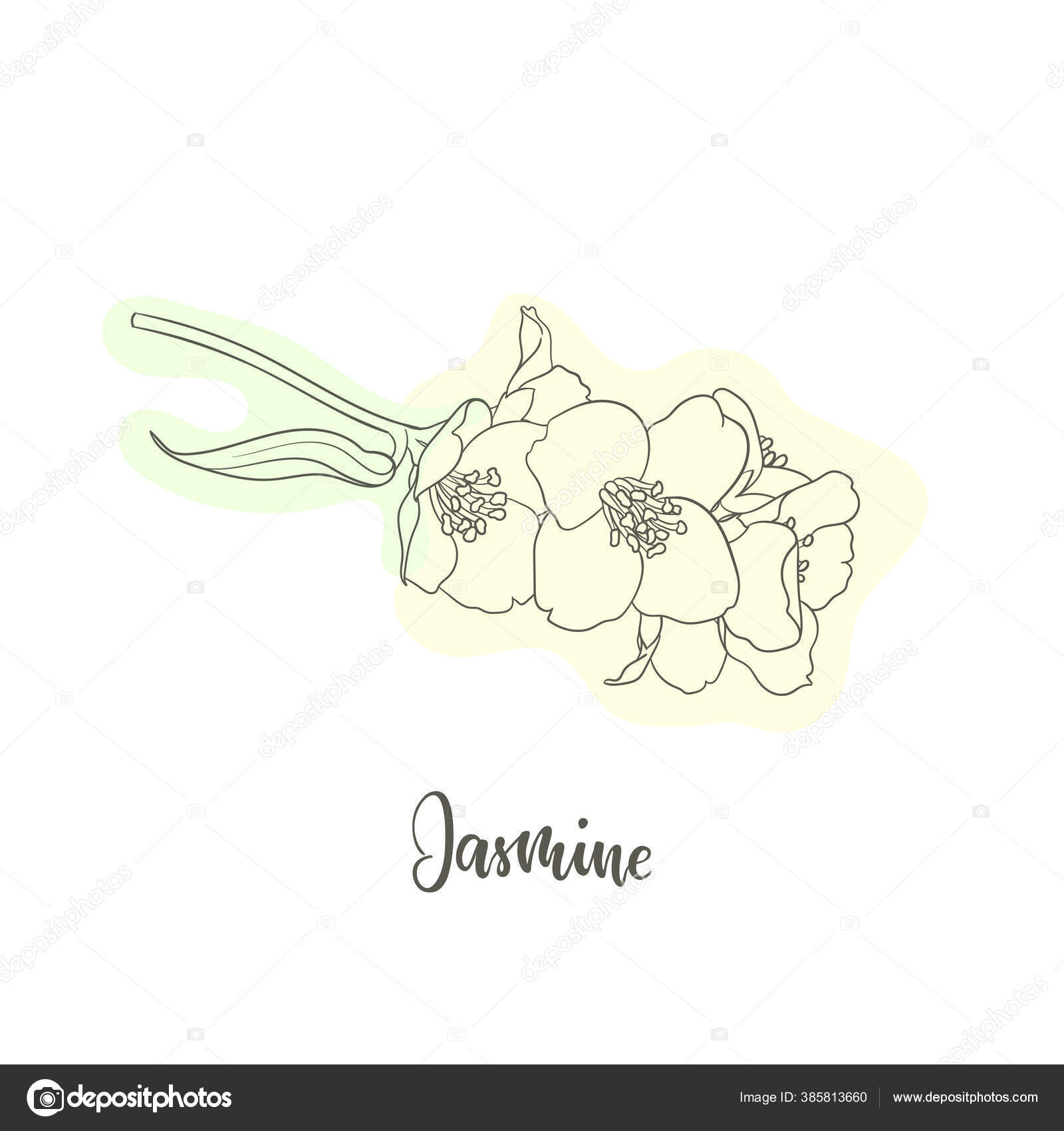 Hitam Dan Putih Cabang Bunga Melati Garis Besar Dengan Bentuk Stok Vektor C Jane Hulinska 385813660