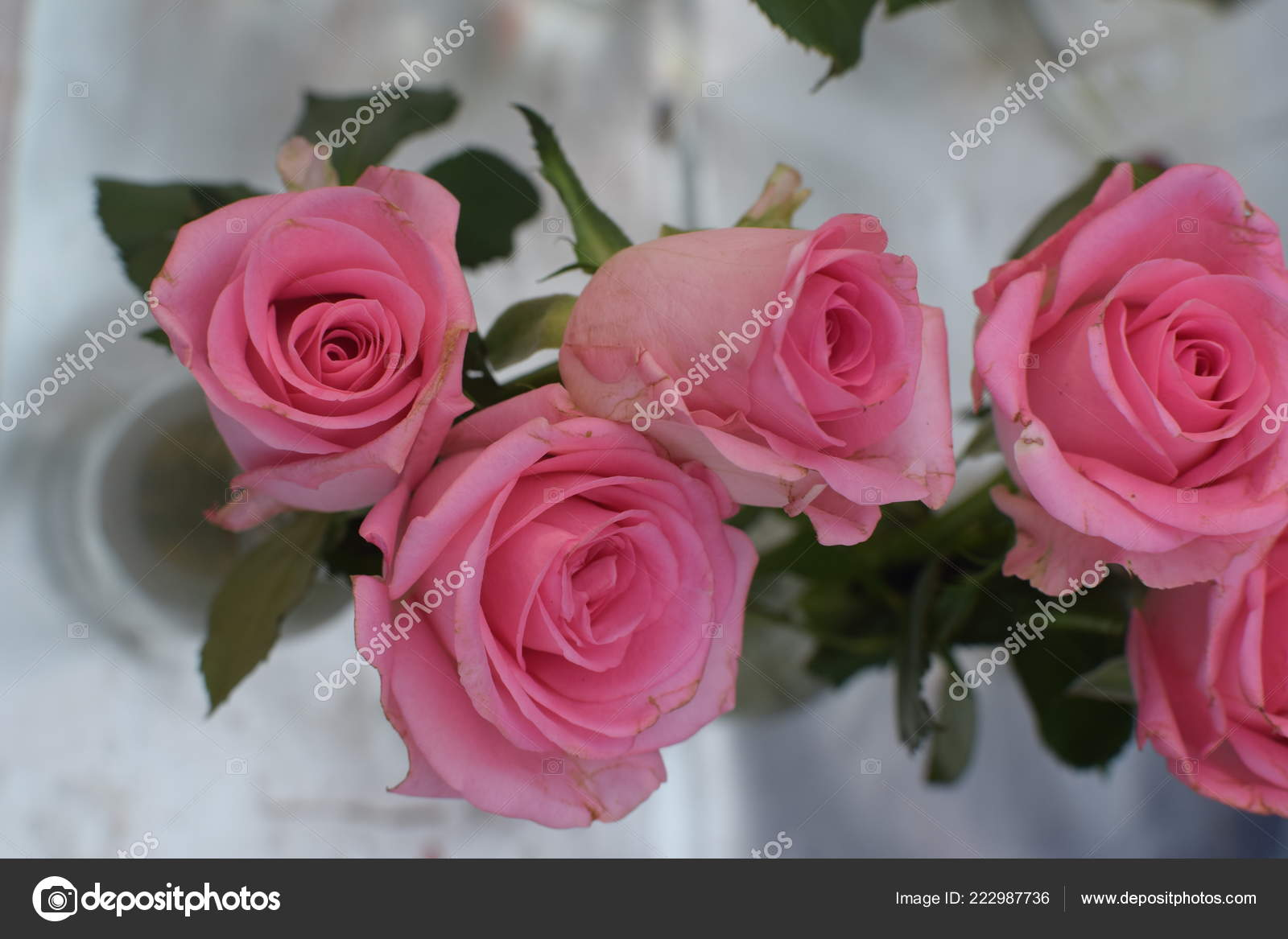 Beautiful Pink Roses Background Wallpaper Stock Photo