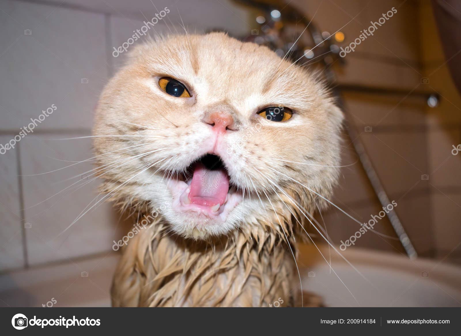 mokré krémové kočička pic velký bílý péro Cumming
