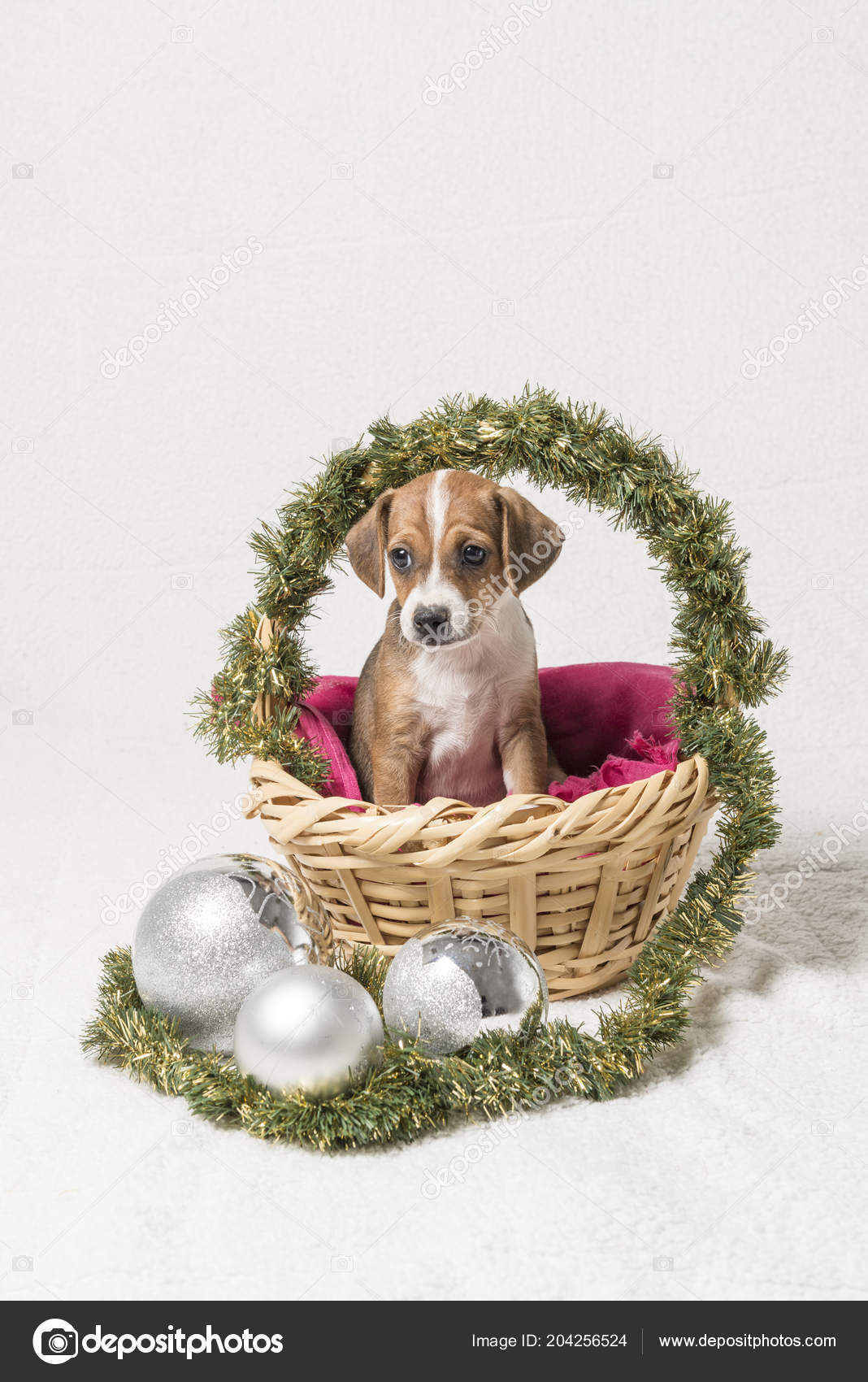Puppy Basket Christmas Decorations White Background — Stock Photo