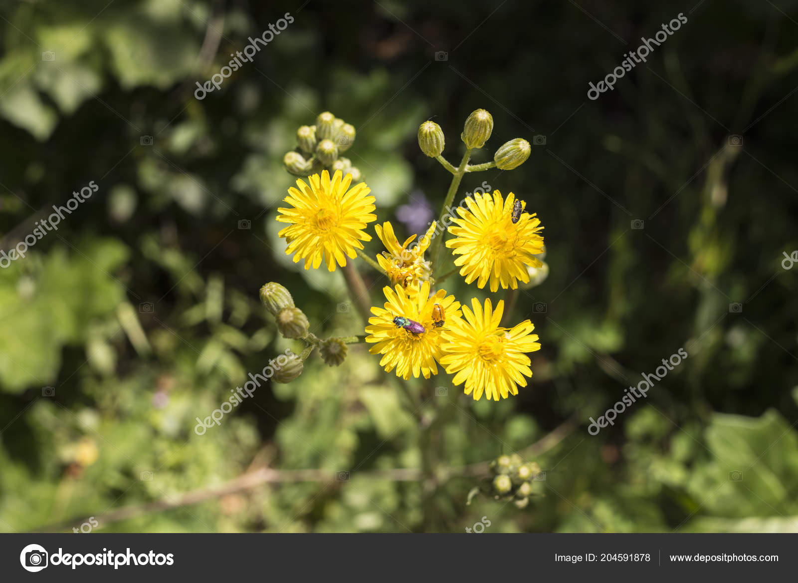 Insects yellow flowers collecting pollen stock photo selugallego insects yellow flowers collecting pollen stock photo mightylinksfo