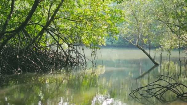 Krásná přírodní. Čerstvý Zelený strom a řeka v lese s slunečního záření a vlhkosti