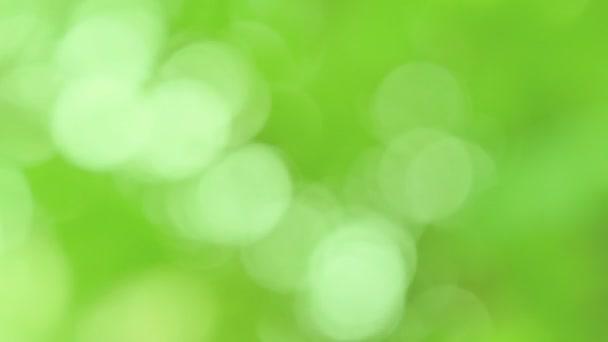 Zelené bokeh a rozmazané pozadí