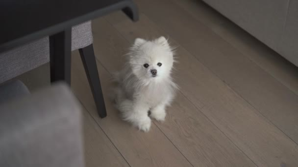 Small white dog sitting at floor