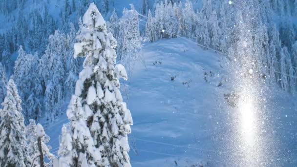 Snowflakes Amazing Illuminated Snow Particles Floating in Sunbeam Sunlight Nature Winter Scene