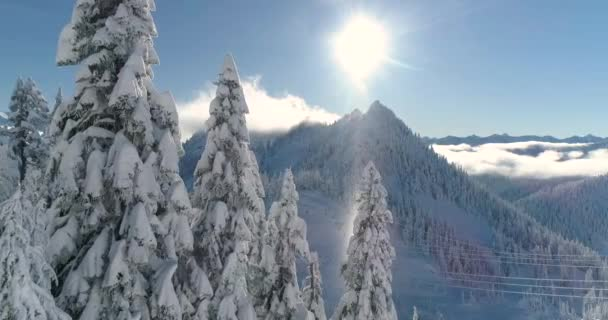 Unreal Lighting Sunbeam Through Snowing Air Particles Illuminated Tree in Wintertime Mountain Landscape