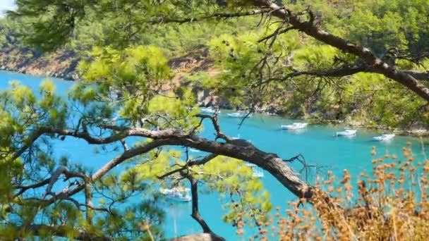 Beautiful sea view through the pine trees branches