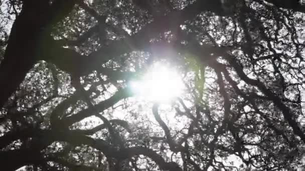 Sunlights shining through the branches of a large tree