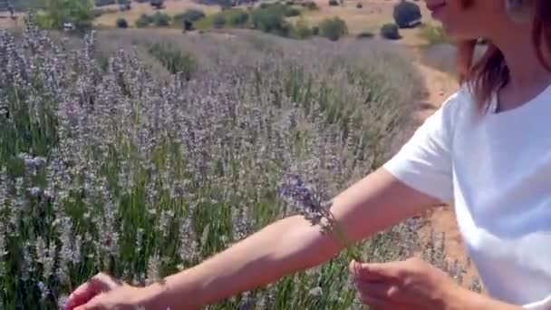 Frau pflückt Lavendelblüten