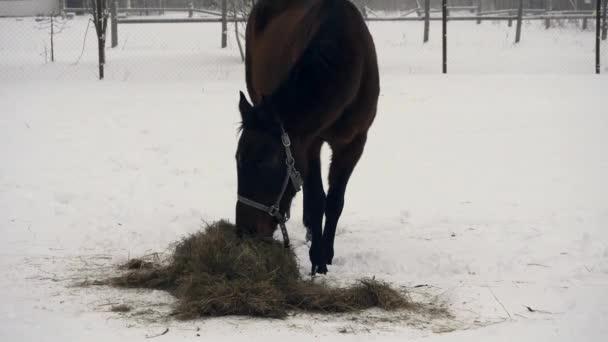 Télen a Fekete-ló étkezési széna