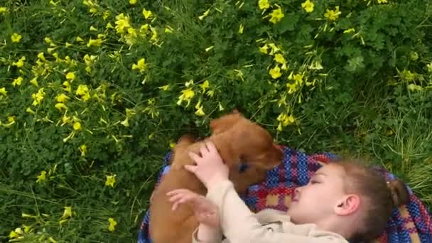 Cocker spaniel puppy licking pretty girls face