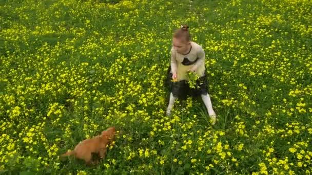 Hübsche Mädchen Picking Blumen gelb Feld mit einem Welpen