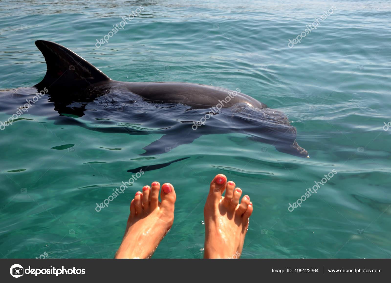 Фото вагина дельфина, Половые органы дельфинов: описание 20 фотография