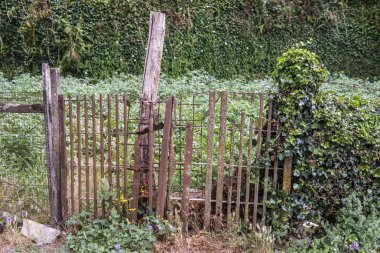 old small fence in lush greenery