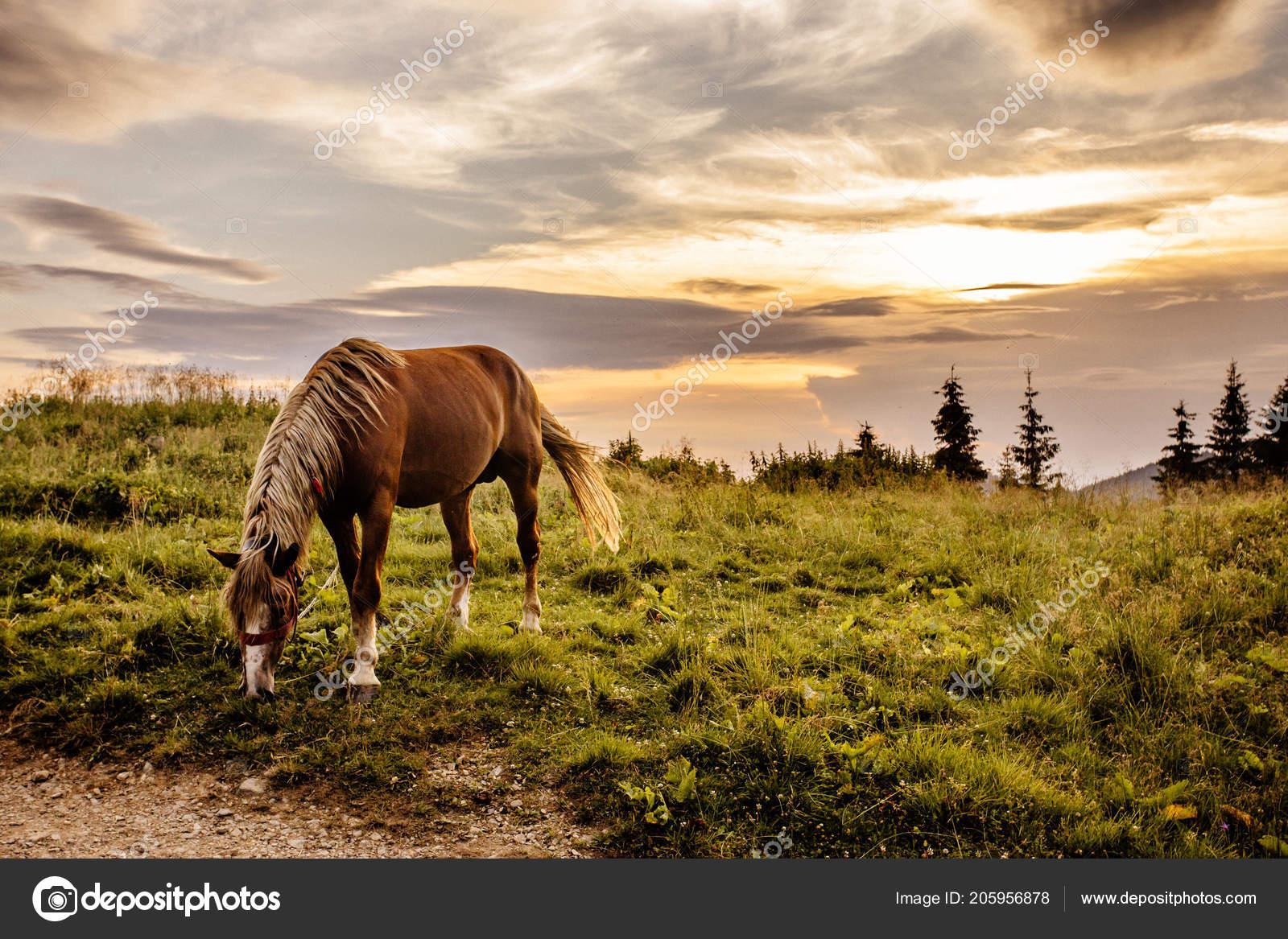 Horse Background Beautiful Nature Mountains Sunset