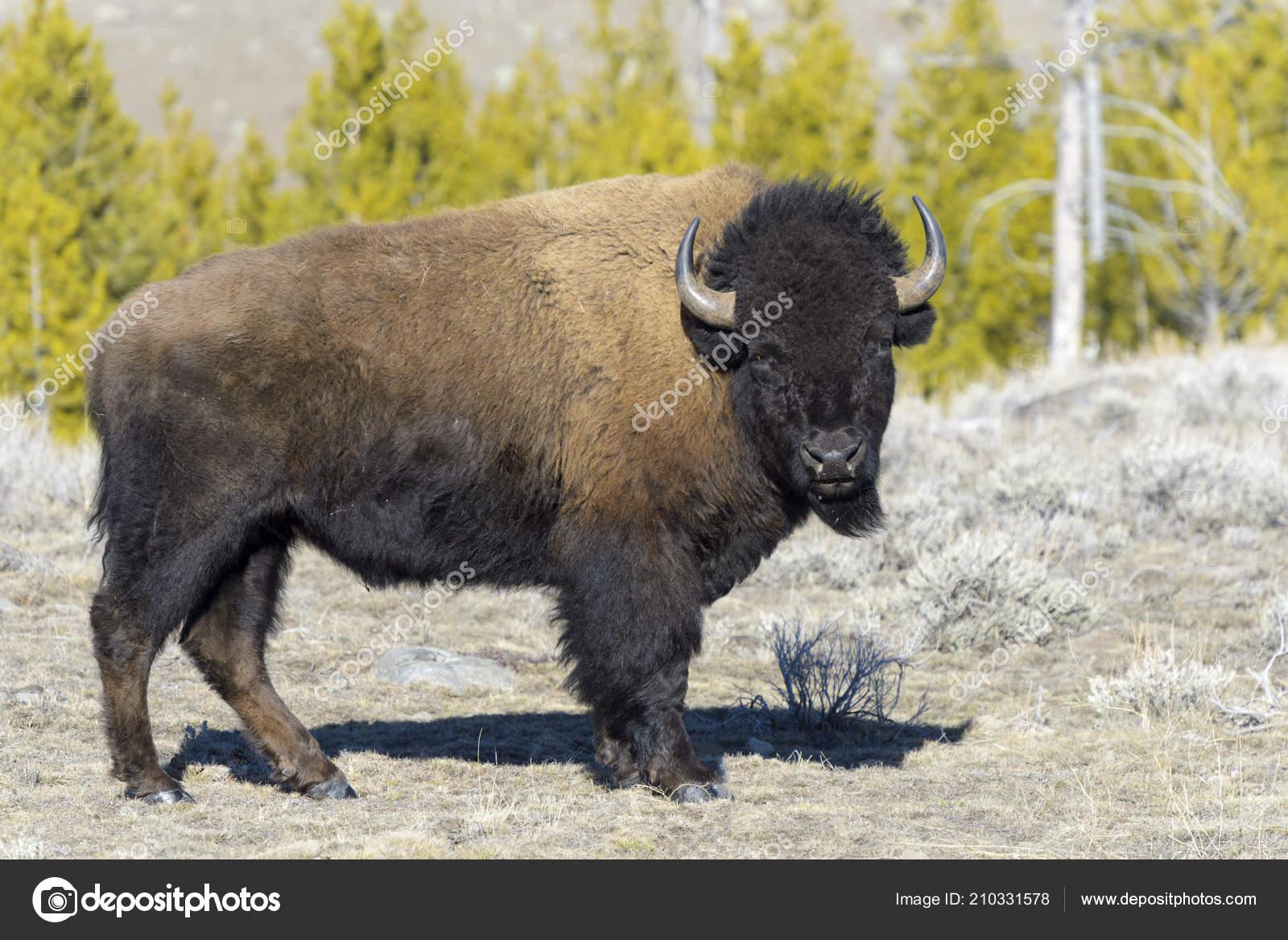 Wyoming zdarma