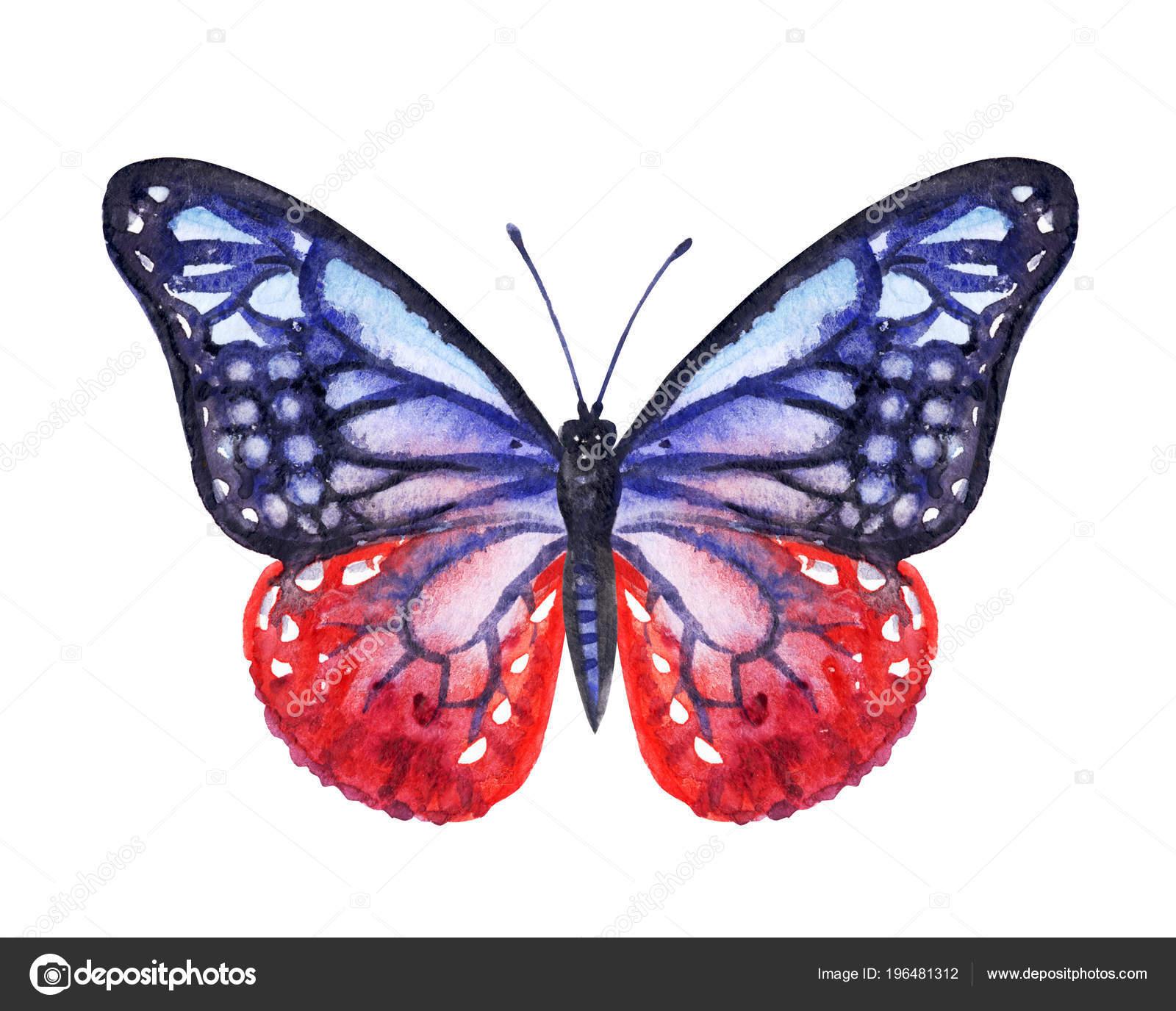 Modra Cerveny Motyl Akvarel Kresba Bilem Pozadi Izolovane Stock