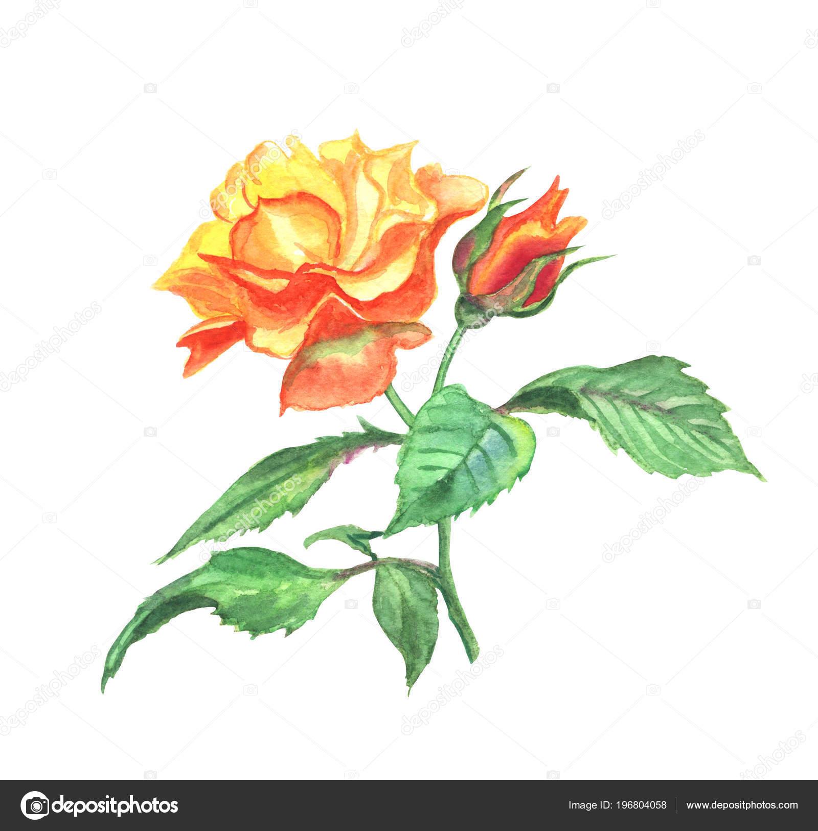 Jaune Rose Aquarelle Dessin Escalade Sur Fond Blanc Isole