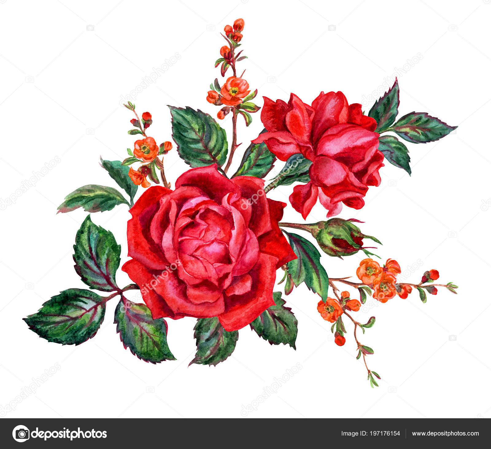 Flores Rojas Para Dibujar Ramo Rosas Rojas Ramas Flores Membrillo