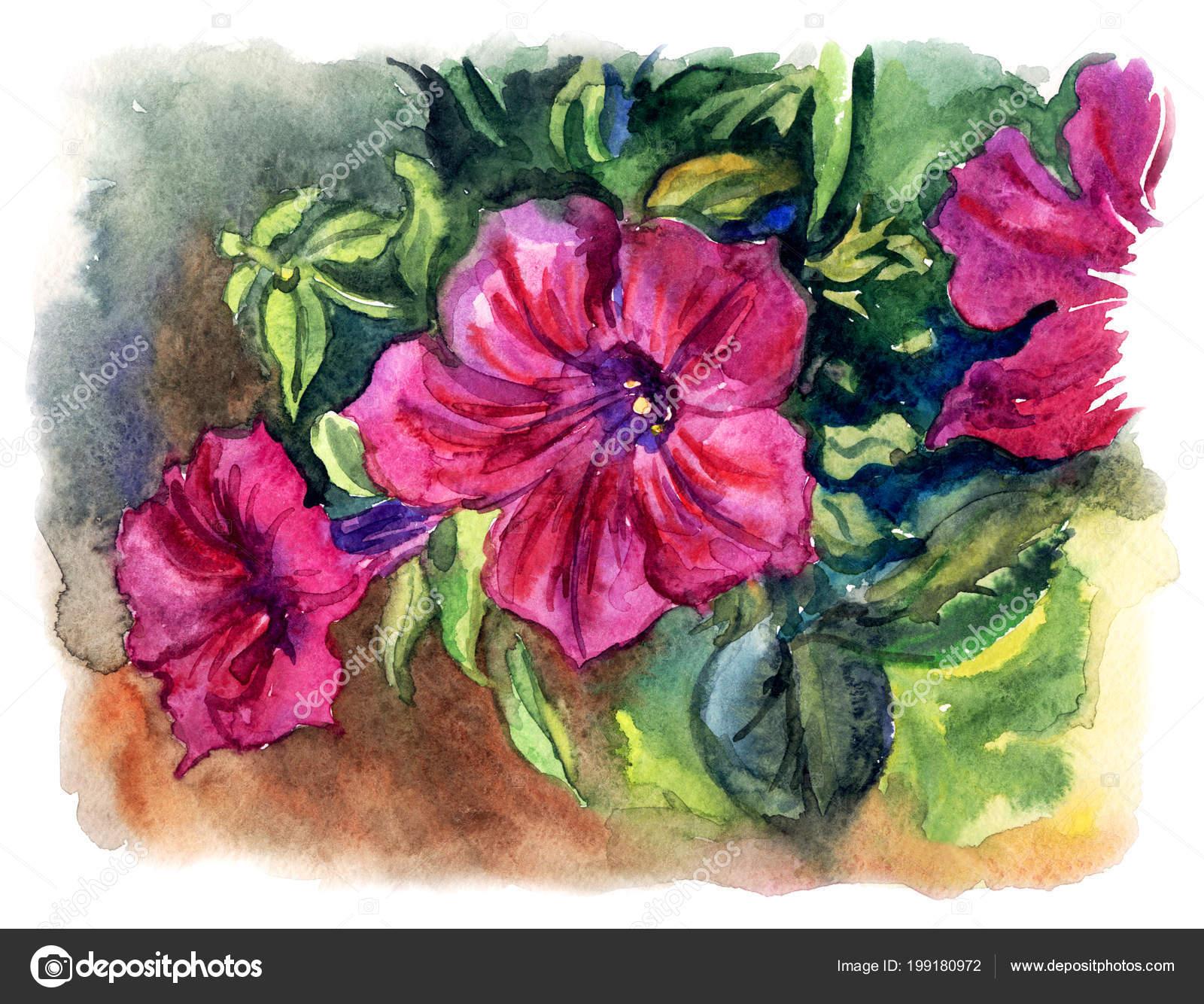 Flores Petunias Sombra Ilustracion Acuarela Dibujo Mano Foto De - Flores-de-sombra