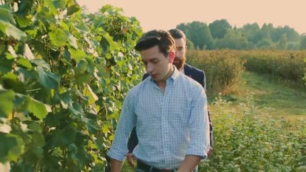 Coworking férfiak a szőlő szőlő feltárása