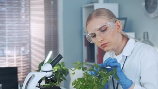 im modernen Labor Smart Frau in Labormantel und Schutzbrille untersucht die Pflanze im Topf