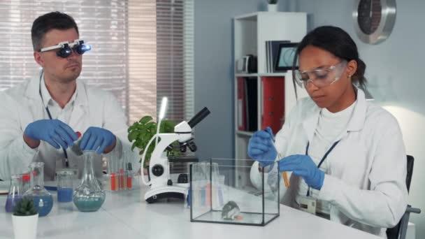 Schwarze Forscherin macht Experiment mit Hamstern im modernen Chemielabor