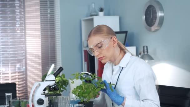 Forscherin nimmt Pflanze unter die Lupe