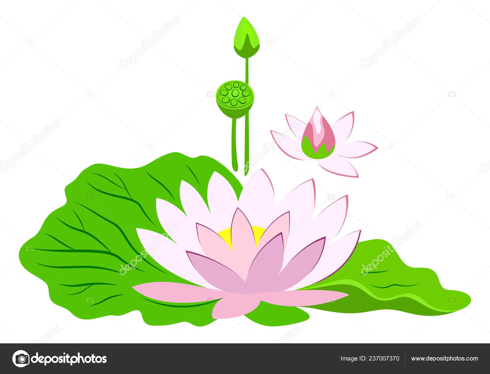 Pink Lotus Flower Green Leaves Poster Water Lily Vector Illustration