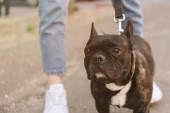 kivágott kilátás a lány áll közel aranyos francia bulldog