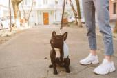 kivágott kilátás a lány áll közel aranyos francia bulldog orvosi maszk