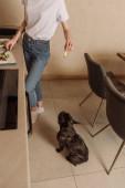 abgeschnittene Ansicht von Mädchen mit Avocado-Scheibe in der Nähe der niedlichen französischen Bulldogge